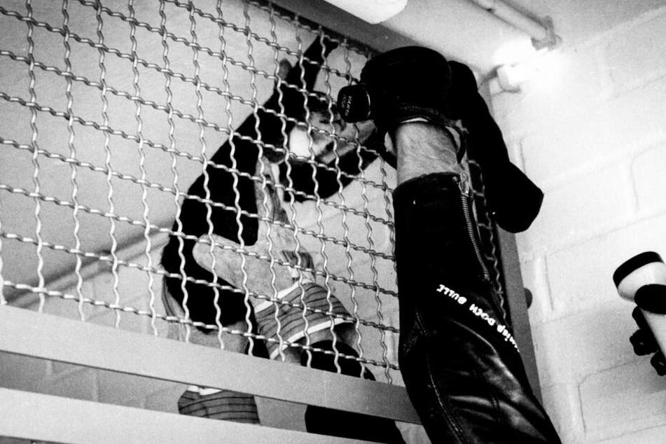 Karin Mück gehörte zu einer Gruppe radikaler Tierschützer, die in Versuchslabore einbrach und die gequälten Lebewesen aus ihrer misslichen Lage befreite.