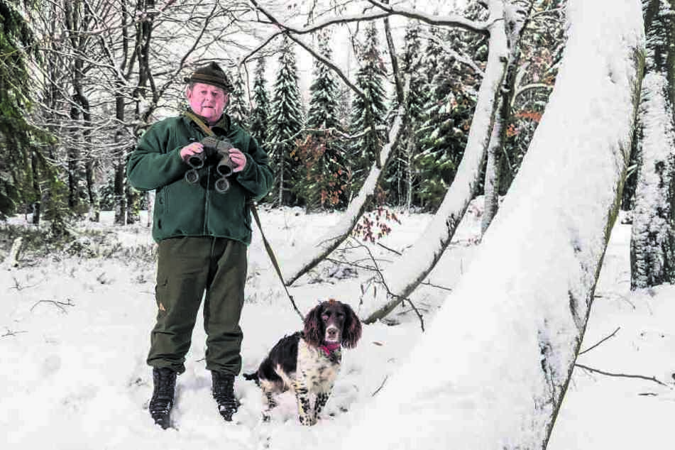 Auf der Lauer: Jäger Gerhard Bräuer (66) mit seinem Deutschen Wachtelhund Kari vom Auberg (8 Mon) vermutet im Forstrevier um Grumbach bei Jöhstadt Wölfe.