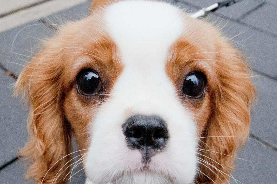 Im Notfall sollen Hundebesitzern ihren Lieblingen auch zur Seite stehen können.