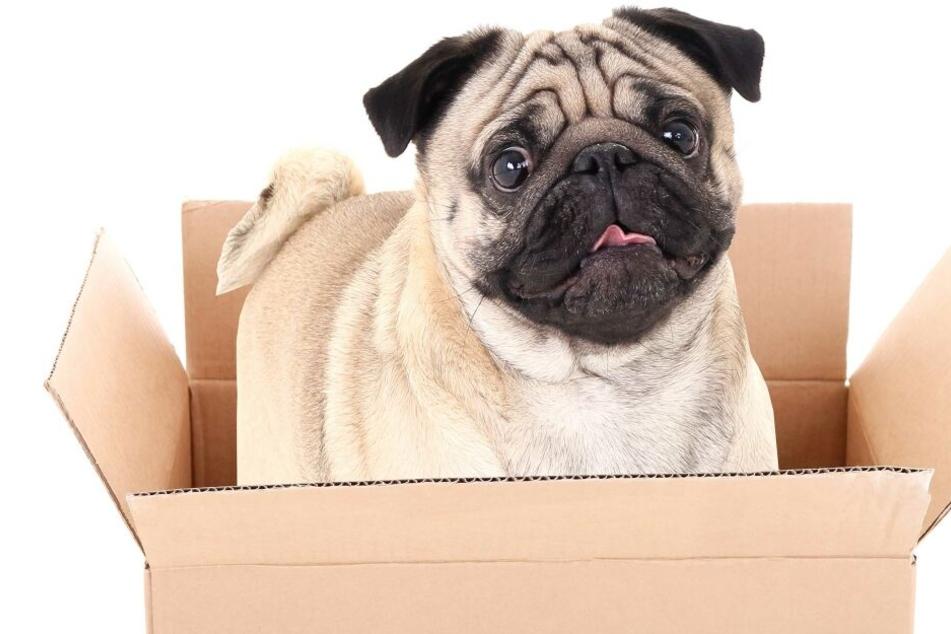 Stadt pfändet Familienhund und verkauft ihn bei Ebay