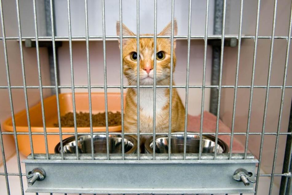 Die Angeklagten sollen ihren Sohn unter anderem in einen Katzenkäfig gesteckt haben.