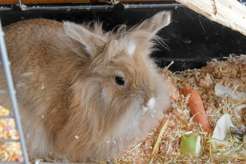 Was wird wohl aus diesem Kaninchen?