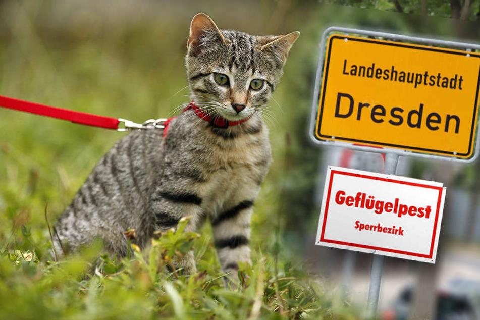 Schläfert Dresden jetzt alle freilaufenden Katzen ein?