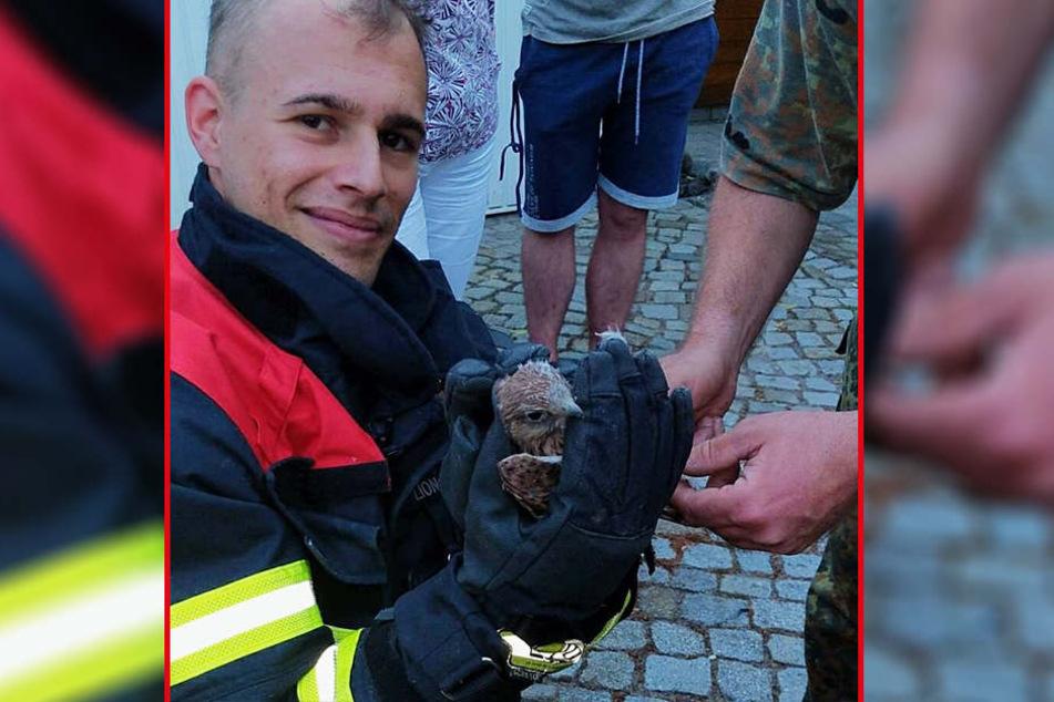 Feuerwehrmann Alexander Kronenberger rettete eines der Falkenküken.