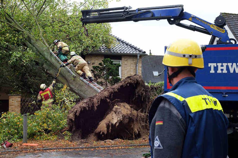 Mitarbieter der Feuerwehr und des Technischen Hilfswerks (THW) entfernen einen umgekippten Baum.
