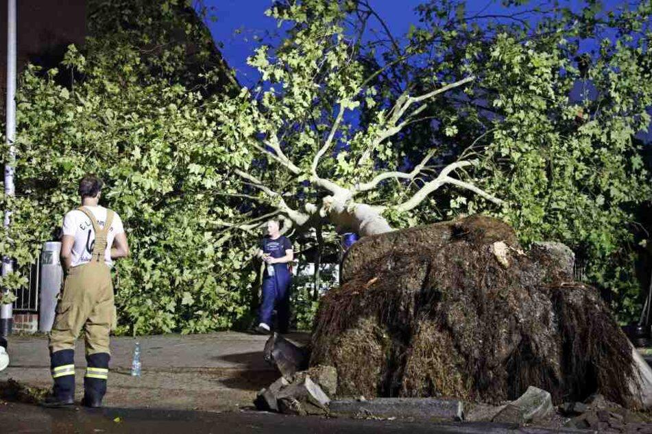 Ein umgestürzter Baum liegt vor Wohnhäusern in Hilden im Kreis Mettmann. Ein Unwetter war über den Ort hinweggezogen.