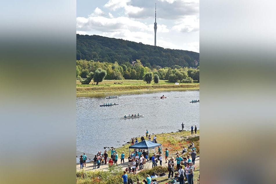 Bei der Ruder-Regatta auf der Elbe siegte am Ende der gute Zweck.