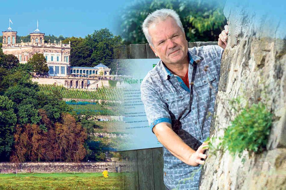 Peter Weidenhagen (57) kennt die Legenden zu den Weinberg-Echsen.