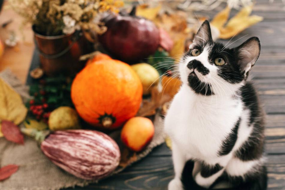 Katzen Ernährung: Dieses Gemüse ist gut für Deine Katze