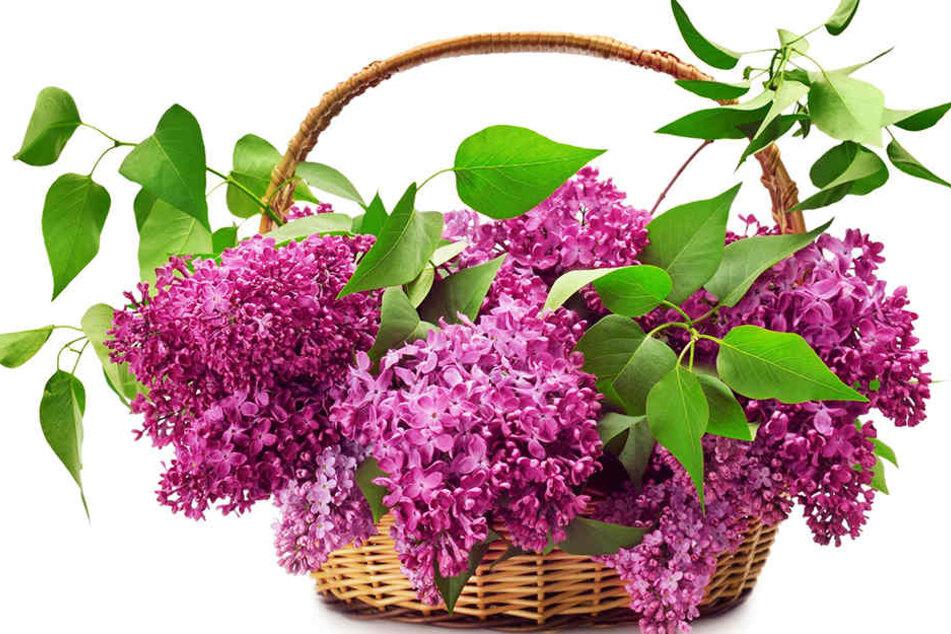 Auf dem Bauernmarkt in Gütersloh bekommt Ihr wunderbare Blumen.