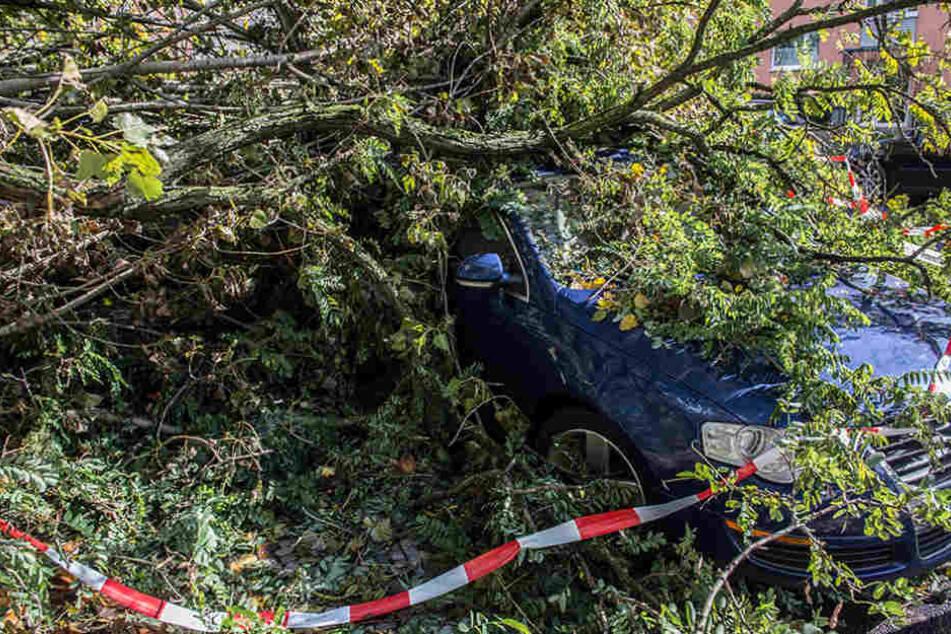 In Berlin und Brandenburg fielen zahlreiche Bäume auf Straßen und Autos während des Sturms.