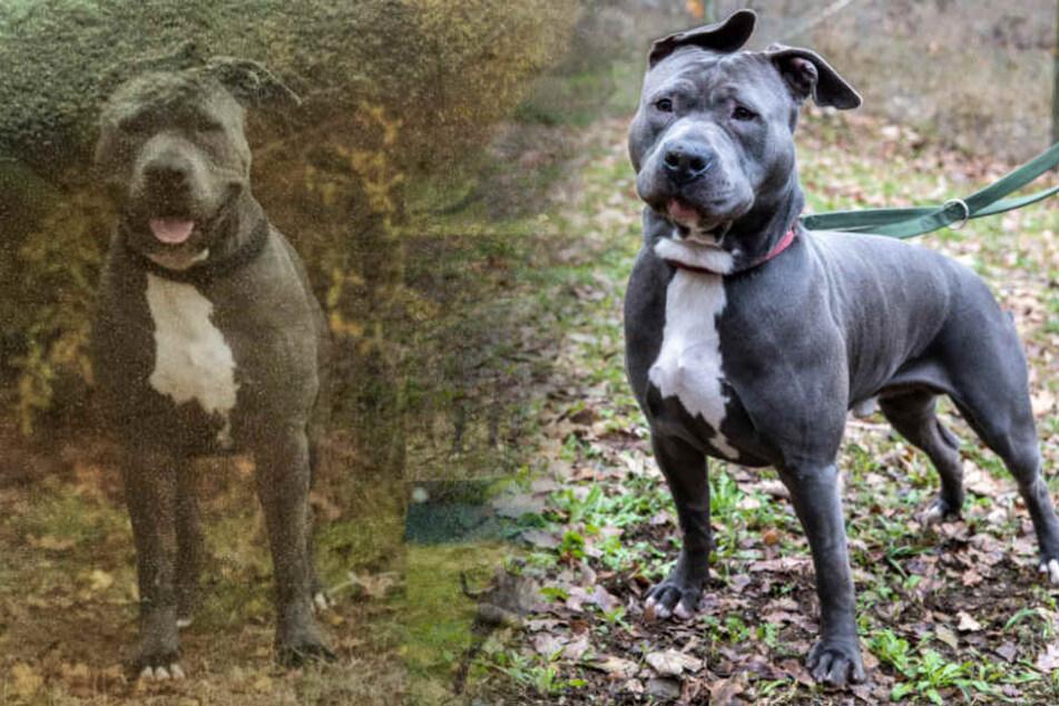 Drama um Ronny: Warum will diesen Hund niemand haben?