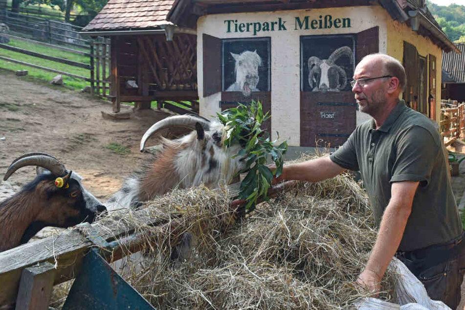 Meissens Tierparkchef Heiko Drechsler (57) muss wegen finanzieller Nöte Ende des Jahres schließen. Jetzt reagiert die Stadt vielleicht doch noch.