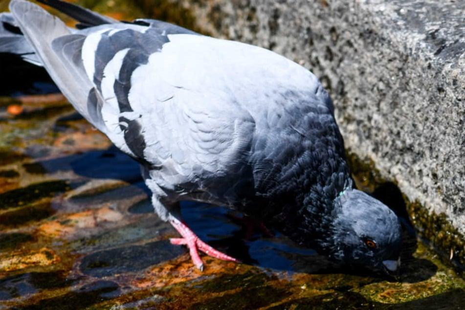 Mann füttert Tauben zu Tode und muss dafür vor Gericht