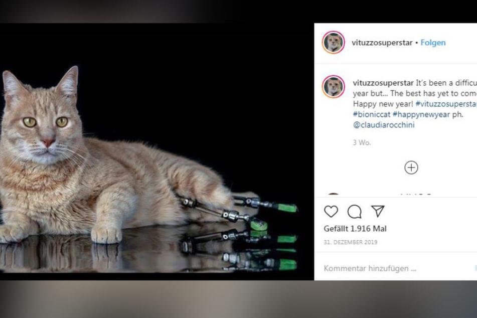 Was für ein schöner Kater. Vito ist auf Instagram etwas ganz Besonderes.