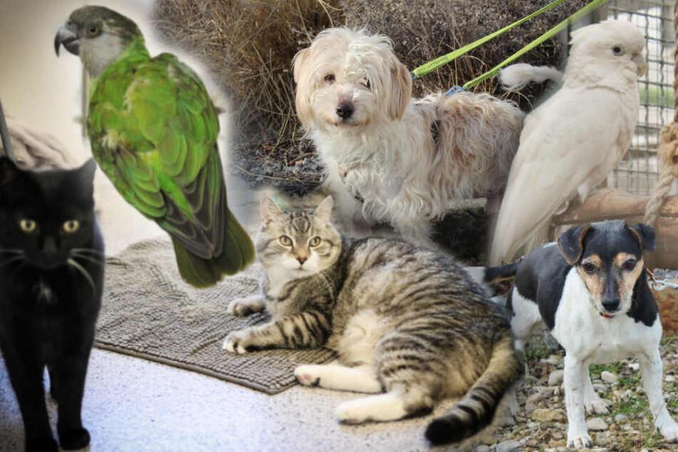 6 besondere Tiere: Warum will niemand diese Hunde, Katzen und Papageien haben?