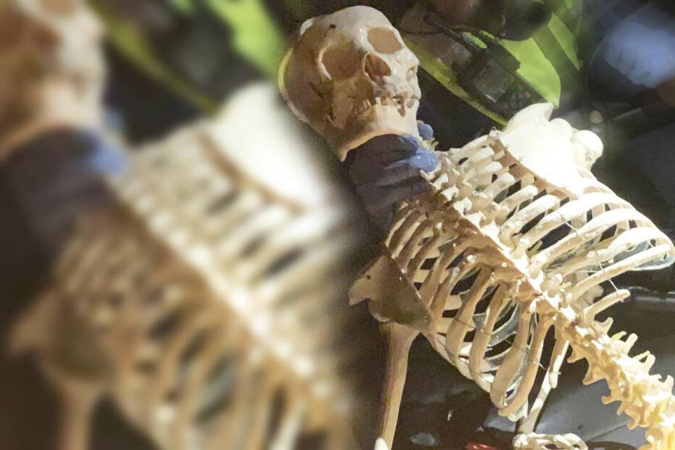 Nach Einbruch: Polizei findet menschliches Skelett auf Grundstück!