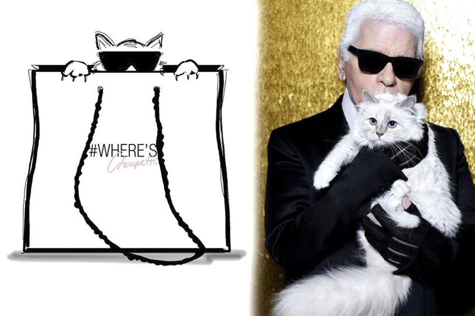 Katze von Karl Lagerfeld (†85) vermisst: Wo ist Choupette?