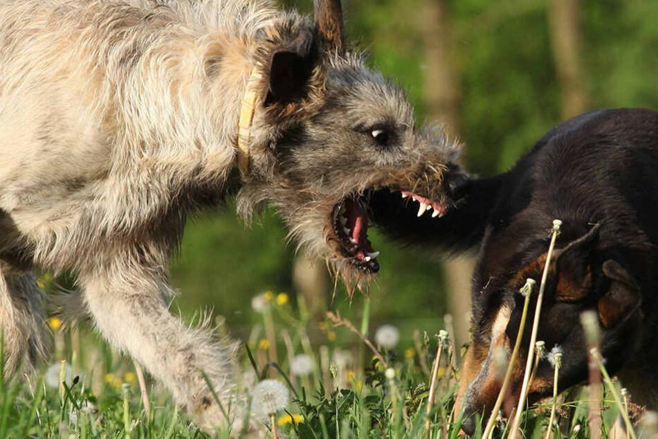 Die Polizei sucht derzeit nach dem Hund, der die Frau und ihren Vierbeiner angriff (Symbolbild).