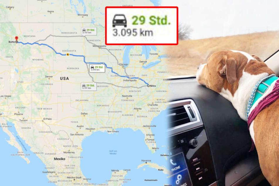 Hund Monate nach Entführung 3000 Kilometer entfernt gefunden: So kam er jetzt zurück!
