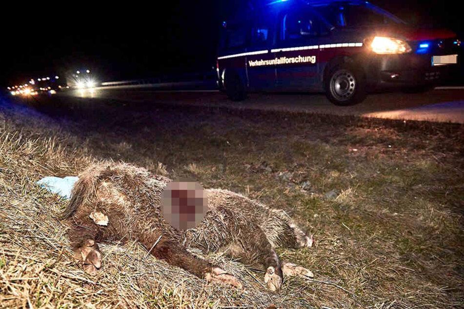 Das Wildschwein überlebte den Unfall nicht.