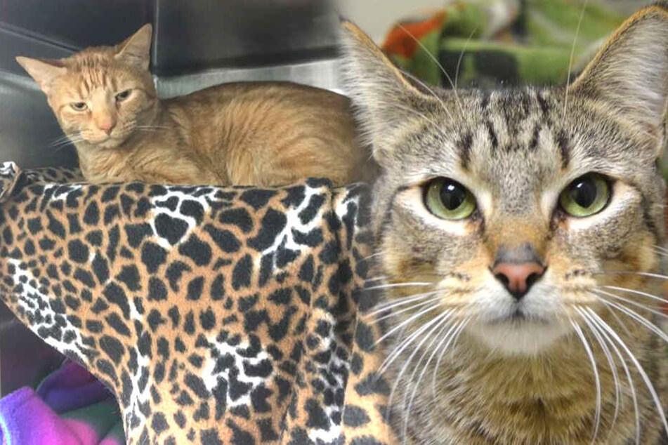 Frau filmt Katzen, damit den Tieren geholfen wird