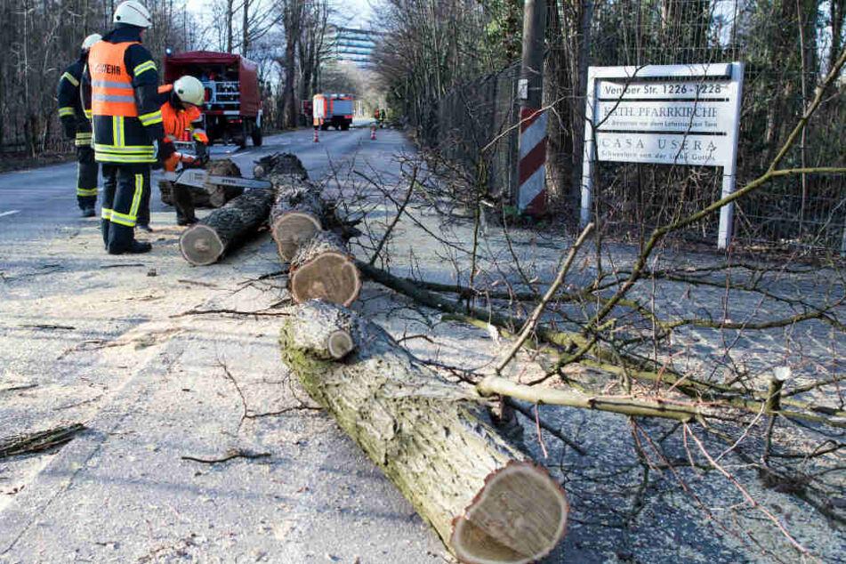 Die Kameraden der Feuerwehren in ganz NRW mussten viele umgestürzte Bäume zerlegen.