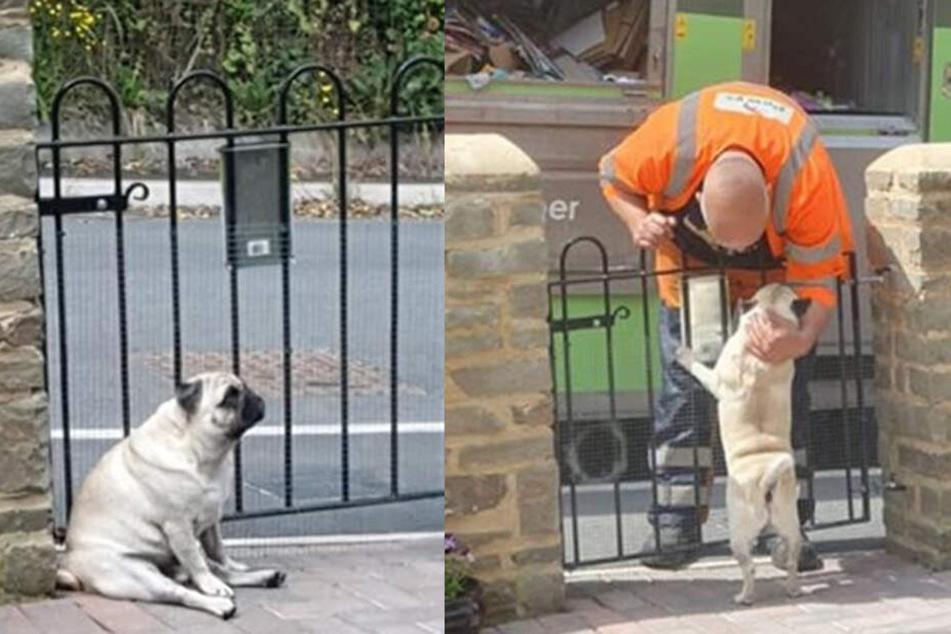 Hund Walter wartet montags auf seinen Lieblings-Müllmann.