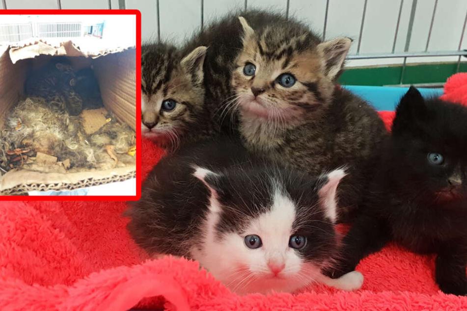 Die Katzen wurden einfach auf einer Müllhalde ausgesetzt, sind am Ende alle gestorben.