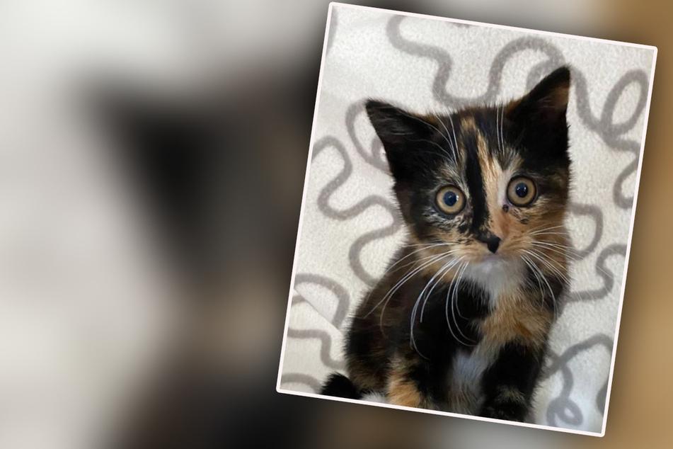 """Niedliche Samtpfote wirft Rätsel auf: """"Die Katze, die vom Himmel fiel"""""""