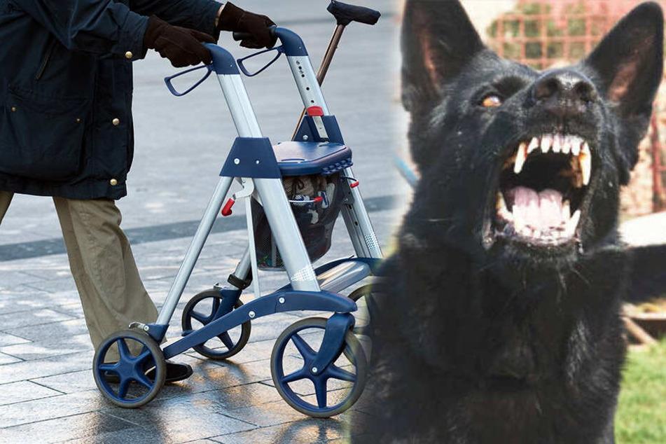 Zwickau: Hund attackiert Rollator-Oma