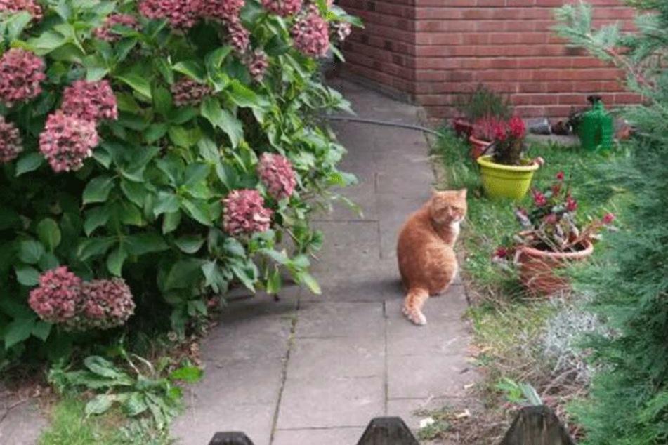 Frau ist völlig perplex, als sie diese Katze sieht und macht sofort Fotos