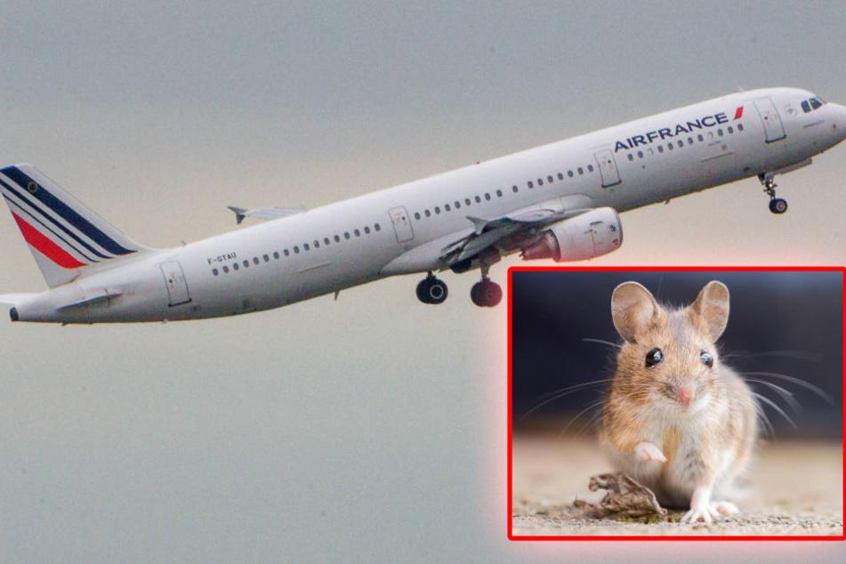 Der Flug vonBamako nach Paris musste um ganze 48 Stunden verschoben werden - und das alles nur wegen eines kleinen Nagers. (Symbolbild)