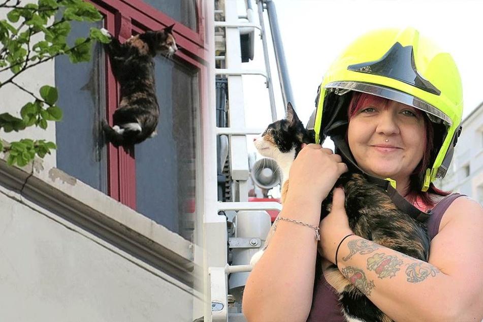 Feuerwehr tierisch im Einsatz: Katze hing am Fenster