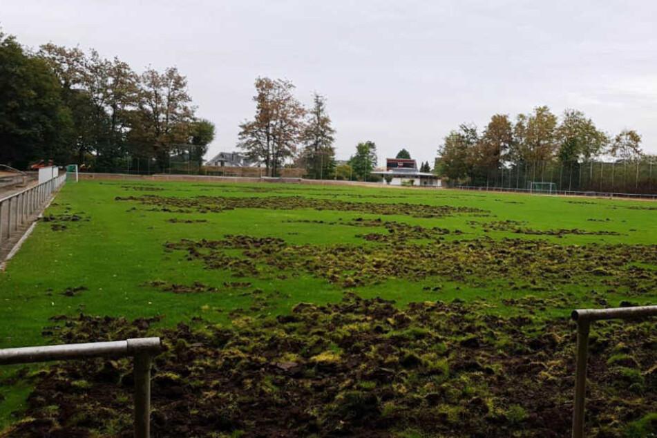 Wildschwein-Horde verwüstet ganzen Fußballplatz: 100.000 Euro Schaden!