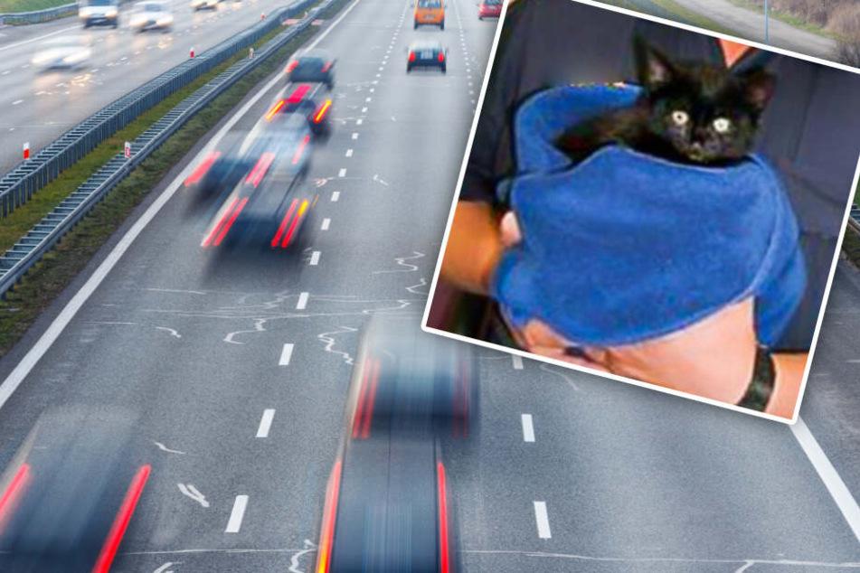 Katzenbaby auf A3 aus fahrendem Auto geworfen? Ein Passant wird zum Helden
