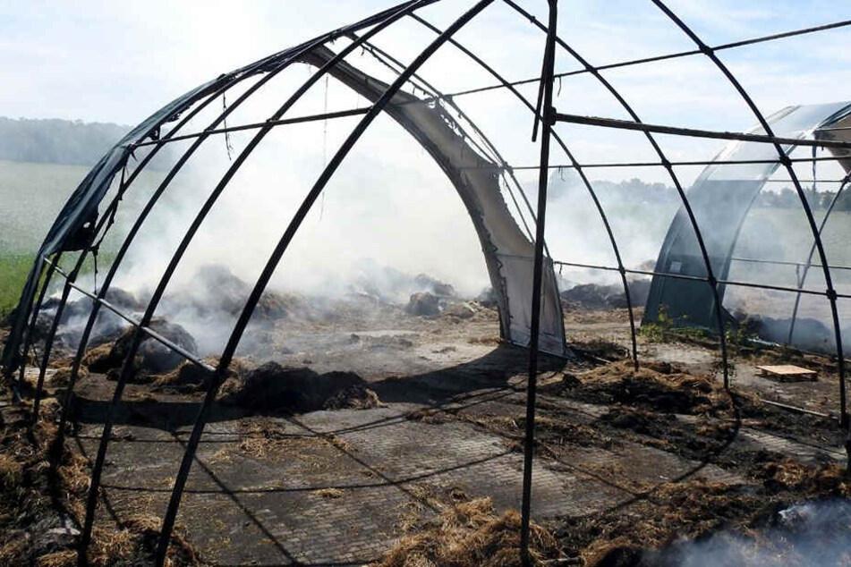 In den Zelten waren Strohballen zur Tierfütterung untergebracht.