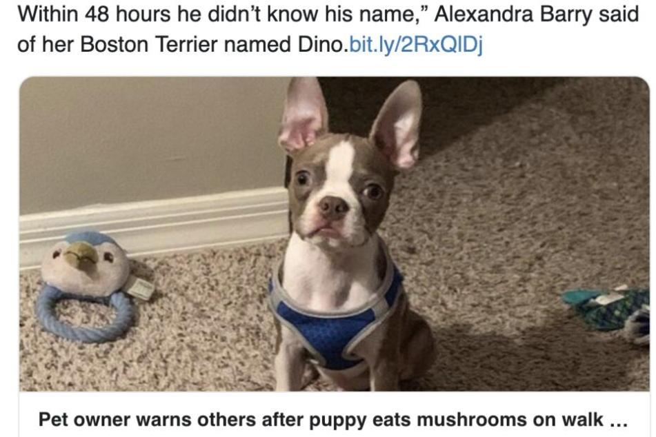So wird über den Hund berichtet.