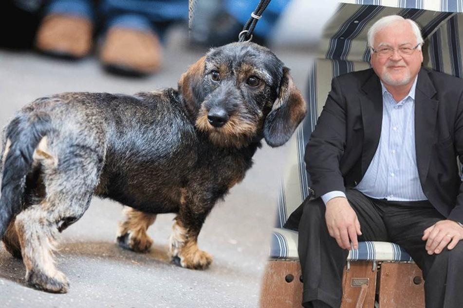 Peter Harry Carstensen (CDU) wählte nicht, weil der Dackel krankte...