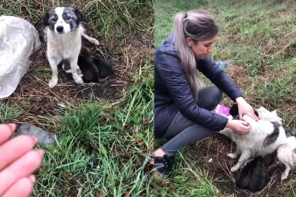 Laura Myatt (32) war als erste bei der Hunde-Mama.