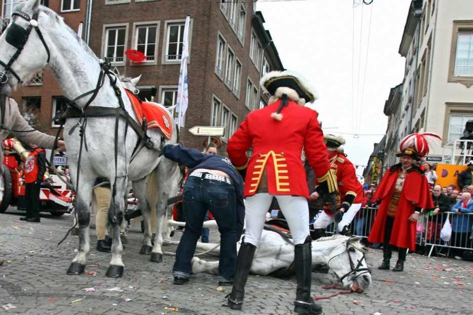Beim Rosenmontagszug 2017 in Düsseldorf kippte ein geschwächtes Pferd um. (Archivbild)
