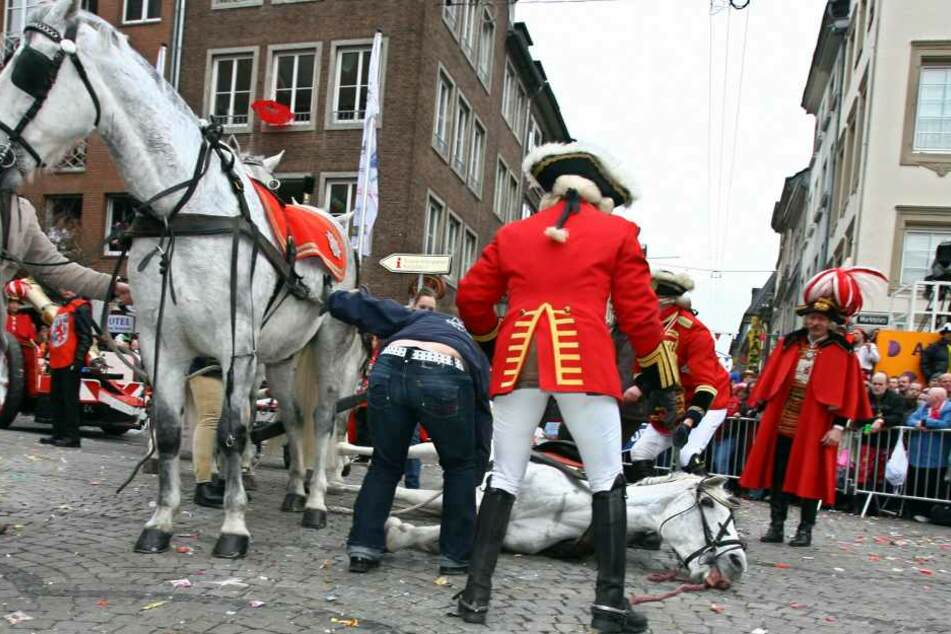 Jetzt sollen die Karnevals-Pferde bluten