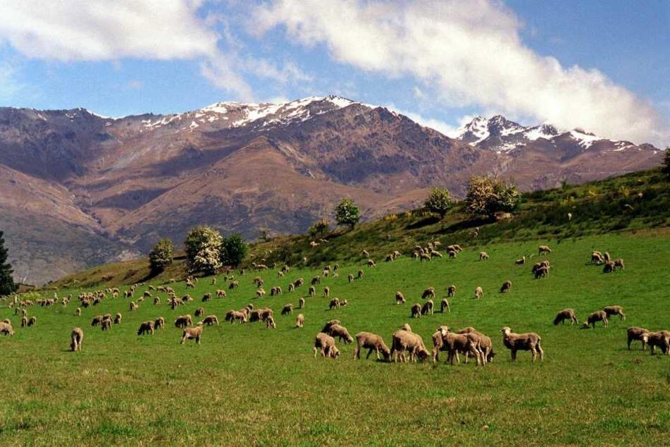 Neuseeland verlangt ab Oktober eine Eintrittsgebühr von Touristen.