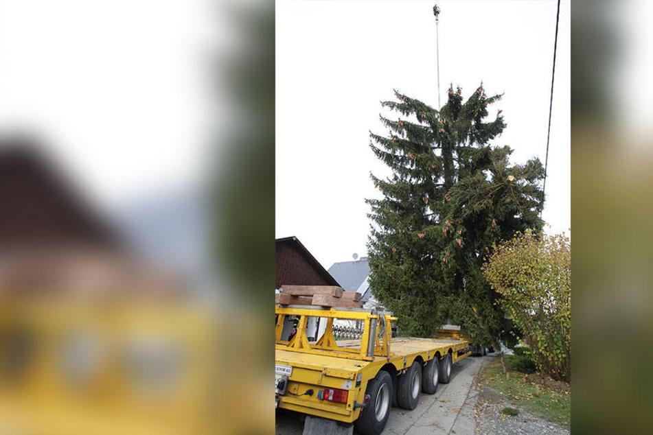Fatal: Die Baumspitze der Plauener Weihnachtsfichte brach vor dem Transport ab.