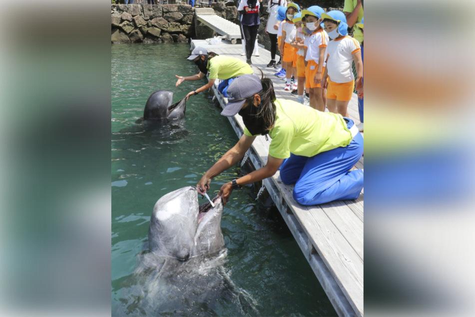 Walen werden während einer Show im Taiji-Walmuseum im Westen Japans die Zähne geputzt, während Kinder dabei interessiert zusehen.
