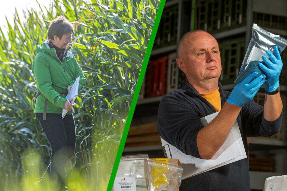 Sachsen: Was experimentiert die Landwirtschaft da eigentlich?