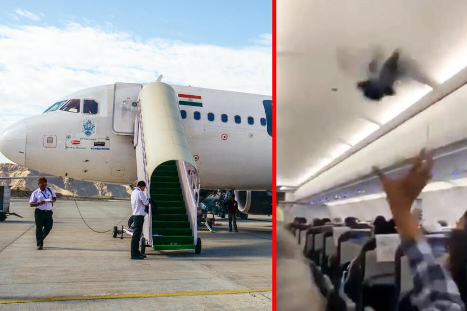 Tauben fliegen lieber im Flugzeug als aus eigener Kraft: Panik an Bord!