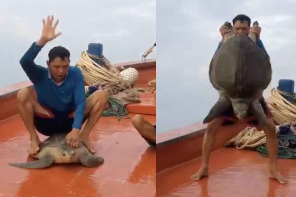Die arme Schildkröte kann sich nicht wehren und muss die grausame Prozedur über sich ergehen lassen. (Bildmontage)