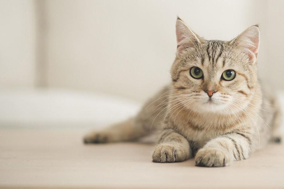 Vater tötet Katze seiner Kinder, was er dann macht, schockiert noch mehr