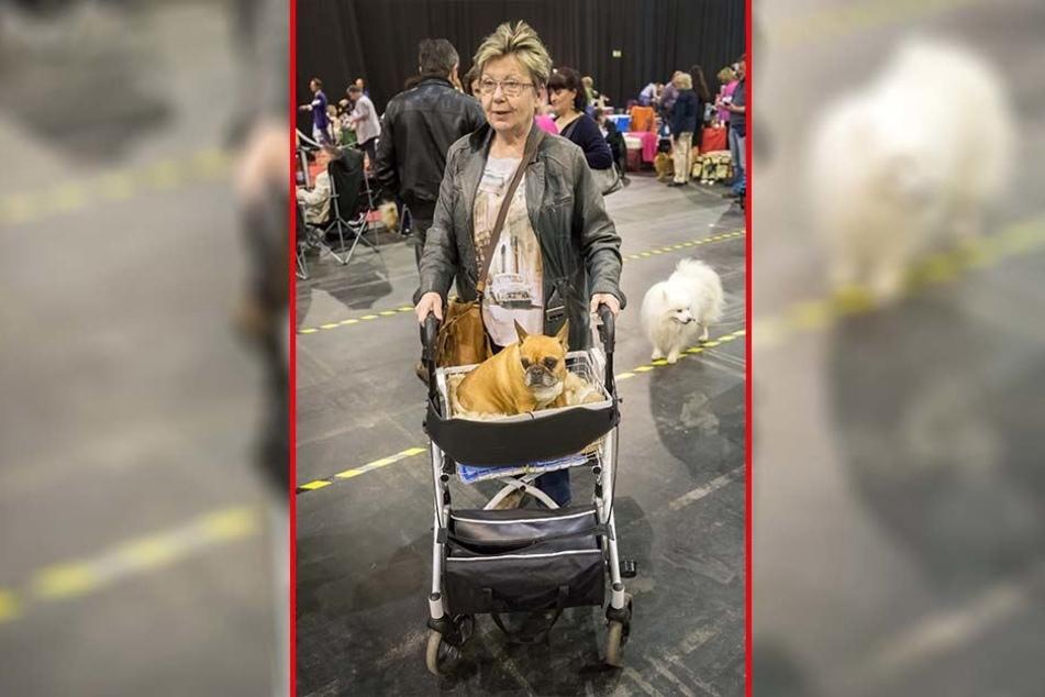 """""""Sie wird gerne gefahren"""", sagt Karin Weickert (68) aus Dresden über ihre französische Bulldogge Emma (10)."""